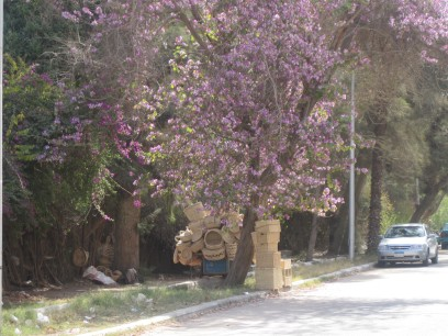 Basket seller on a tree lined street in Maadi